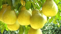 立秋过后, 让宝宝多吃这三种水果, 增强抵抗力少生病