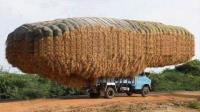 全世界效率极高的农业器械集锦 这操作真的是六六的