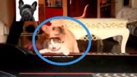 狗狗把小猫咪按在跑步机上一顿怼, 看着好羞涩啊!
