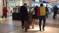 战斗民族遛宠物! 牵着老虎逛商场, 群众竟然不怕!