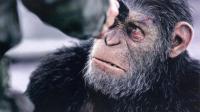 【猩猩是怎样炼成的? 】人变猿变人? 《猩球崛起3》观影前你不得不知的事儿