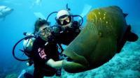 丽贝岛15集:泰国海底深潜价格太凶残,居然是国内价格打三折,而且不短斤少两