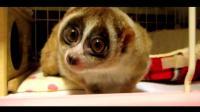 世界十大可爱的动物可以杀死你, 隐藏再温柔下的冷血