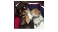 猫咪和狗狗受托照顾小仓鼠, 仓鼠: 我的心好慌啊!