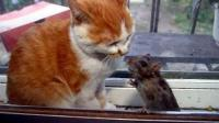 这年头猫已经不抓老鼠了, 和老鼠愉快的亲密玩耍亲如一家