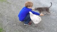 男孩想和猫咪抱抱, 结果突然来了一只鸡钻进他怀里, 鸡也会吃醋呀!