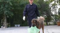 训练狗狗视频 训狗室内大小便