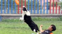 幼犬训练 训练狗狗大小便