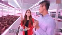 博士小伙开中国第一家植物工厂, 投资超1亿元! 美女记者带您走进探秘