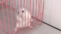 萌宠视频: 萌宠仓鼠宝宝误以为主人要把自己扫地出门, 都快急哭了