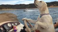 搞笑视频-搞笑萌宠系列视频5-最搞笑的狗狗
