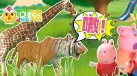 丁丁鸡爱玩具 005 小猪佩奇一家游玩动物园,还看到了恐龙! 小猪佩奇一家游玩动物园