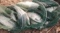 初春季钓鱼技巧 钓鱼调漂技巧 钓鱼调漂技巧图解