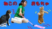 中国爸爸 2017 猫咪玩具大集合 O酱比猫咪玩的更开心 30