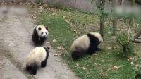 """熊界博尔特! 熊猫""""飙车""""萌翻众人—播单:《熊界博尔"""