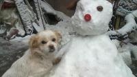 雪地里的狗狗超搞笑 你准备好笑了吗