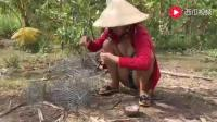 柬埔寨表妹这次玩大了, 甘蔗地里捉了一堆这样的东西