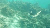 美女海底潜水美若人鱼! 在绚丽的海底玩花样潜水, 真是美不胜收!