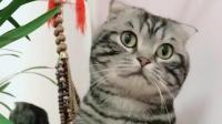 这猫咪火了搞笑配音, 笑抽了! 一起开心每一天