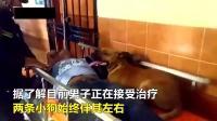 秘鲁: 如此忠诚! 宠物狗陪主人上医院