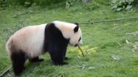 功夫熊猫: 今天我欢后就是开心, 就是要拆家!