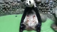 原来熊猫自己洗澡是这样的,网友:熊...熊掌拨清波