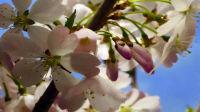 春暖花开 花朵开放绚丽花海 舞台演出高清LED背景大屏幕视频素材TV