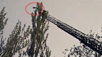 真有九條命? 寵物貓20米高空跳下安然無恙