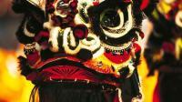 见华人社区里经常舞狮子, 外国的狗狗偷师学艺, 功夫到家了