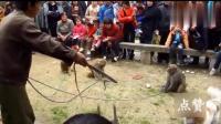搞笑视频, 耍猴人猴子秀实拍, 猴子们表演挺精彩的, 你笑了吗?