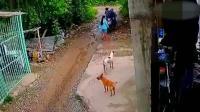 狗狗在家门口玩耍, 女子发现不对劲, 再追还能追上吗