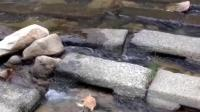 孤独的狗狗, 自己利用河流玩球, 网友心疼!