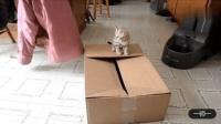 宠物跟纸箱不得不说的搞笑故事, 让我们来看一看