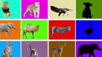 趣味早教: 让宝宝仔细观察这些影子都是什么动物, 认识动物