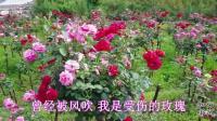 凤凰传奇一首《等爱的玫瑰》经典歌曲, 百听不厌