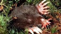 一种生活在北美洲的奇怪动物, 可以为了吃不顾自己的生死