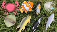 晓美玩具 第一季 认识小丑鱼等8种海洋动物, 小美识动物 244