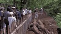 印度发现奇怪生物, 村民纷纷赶来围观, 专家劝众人赶紧撤离!