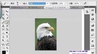 [PS]photoshop47零基础教程 橡皮工具.容差.连续.魔术橡皮擦