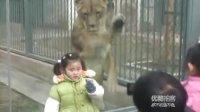 【拍客】实拍动物园游客引狮子抓墙