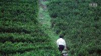 农人微电影:见到食物后面的人 第一季安吉白茶 乡土乡亲 盛善学