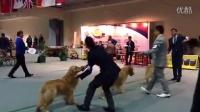 黄金猎犬2 - 2014年菲律宾亚洲展