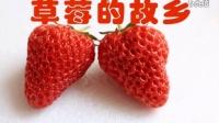 丹东东港草莓宣传—李振东拍摄QQ823918514