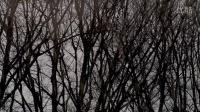 Bottega Veneta 2015-2016秋冬系列 - 合作的艺术