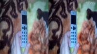智能子母机HTCmini+上手玩(裸眼3D视频左右格式)-RedBok红书3D