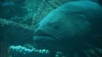 五彩缤纷海底世界