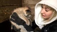 记录猞猁从婴儿到大猫,和女主人的每个温情瞬间