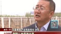 """一带一路合作共赢:一颗小葡萄  造就大产业  宁夏""""紫色名片""""联通世界 北京您早 170429"""