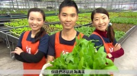 我们的同胞都在种什么——美女带你看台湾农业