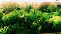 大神级网友的精美草缸, 这个造景我能看一天